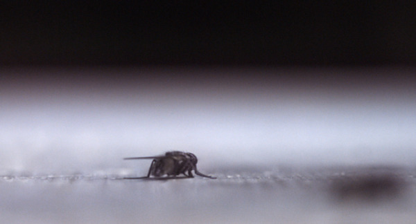 Henrik Håkansson, The End, 2011, Film still