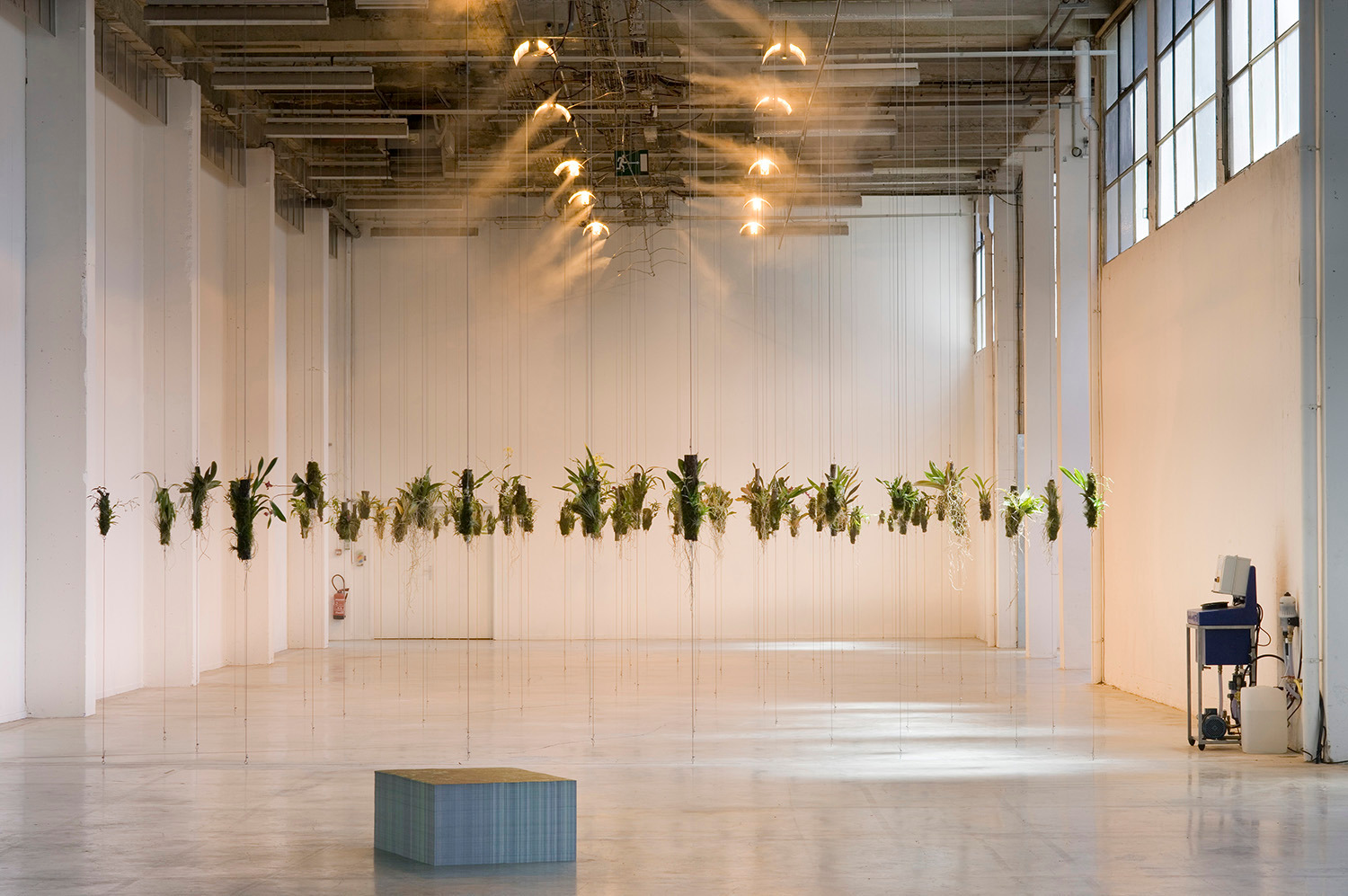 Installation view, 'Through the Woods to Find the Forest, in Tropico-Vegétal (LOST IN PARADISE)', Palais de Tokyo, Paris, 2006