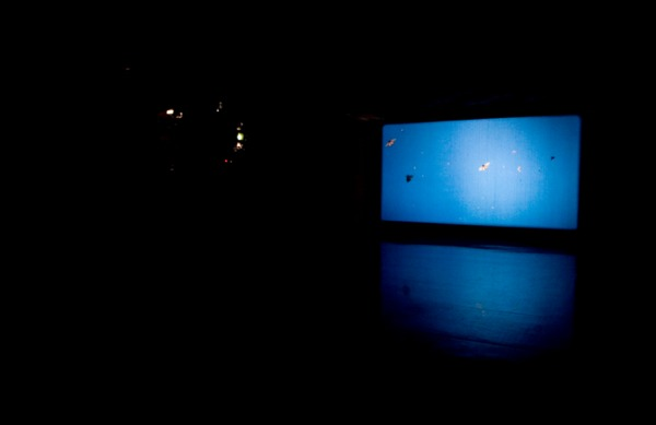 Henrik Håkansson, Monarch - The Eternal, 2008, 35mm film, looped, silent, colour, Installation view 'Novelas de la selva', Museo Tamayo Arte Contemporáneo, Mexico, 2008