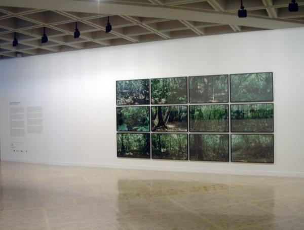 Henrik Håkansson, (Sites) Selva Lacandona, 2008, 12 c-prints, 68 x 102 cm, Installation view 'Novelas de la selva', Museo Tamayo Arte Contemporáneo, Mexico, 2008