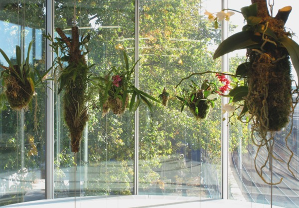 Henrik Håkansson, Broken Forest, 2006, Orchids, tree barks, cables, HPS-light, humidifier, Dimensions variable, Installation view 'Life Forms', Bonniers Konsthall, Stockholm, 2009
