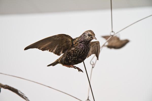 Henrik Håkansson, Vertical Swarm (Sturnus Vulgaris) #01, 2010 (detail), Stuffed starlings, iron, nylon thread, 250 x 330 cm, Installation view, 'A Forest Divided', Lunds Konsthall, Lund, 2012