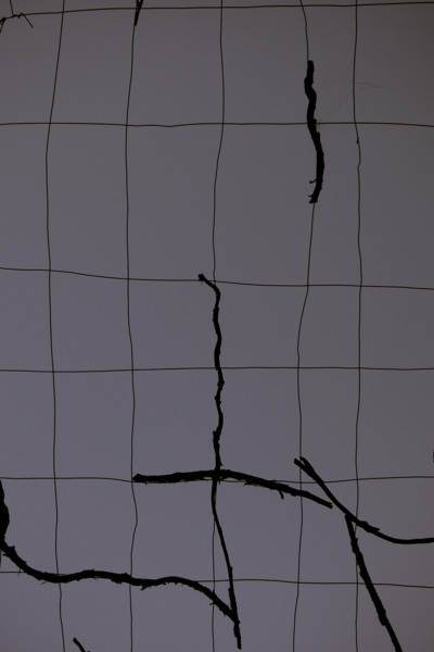 Martin Boyce, A Partial Eclipse, 2012, C-Print, 51.5 x 42 cm