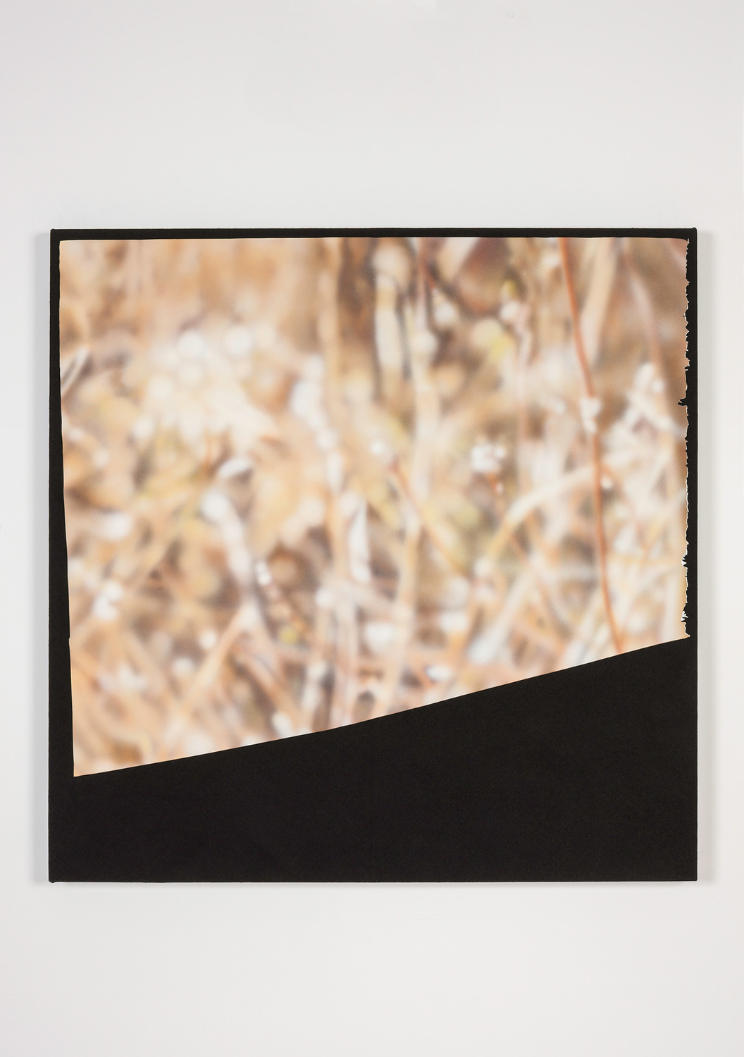 Magazine Painting (Dried Grass), 2014, Oil on aluminum on dyed linen, 96.5 x 96.5 x 4.5 cm