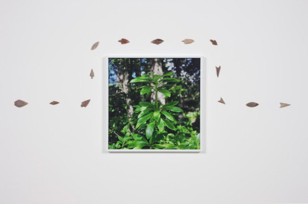Jeremy Deller, Photographs taken while taking an uninvited stroll on the Glenmazeran Grouse Moor August 2014 (detail), 2014, Set of 10 C-Prints with Neolithic arrowheads, 31.8 x 31.8 x 2.5 cm, Installation view, The Modern Institute, Glasgow, 2014