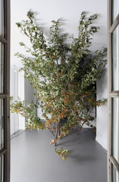 A Tree With Roots, 2010, Site-specific installation, oak tree (Querqus rubra), Dimensions variable