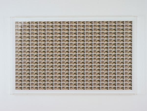 Aug. 6, 2004 (Bembix rostrata), 2006, Lambda print, 100 x 162 x 7.7 cm