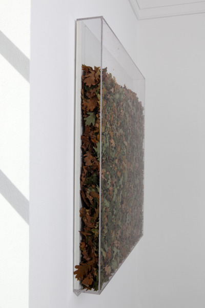 The Leaves of a Tree with Roots, 2010, Leaves, plexiglass box, 100 x 100 x 10 cm