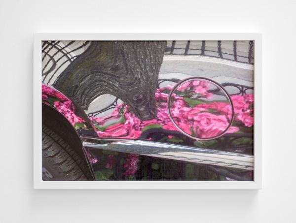 Petrolcap Hydranges, 2015, Archival pigment print, 43.5 x 63.5 x 3.5 cm
