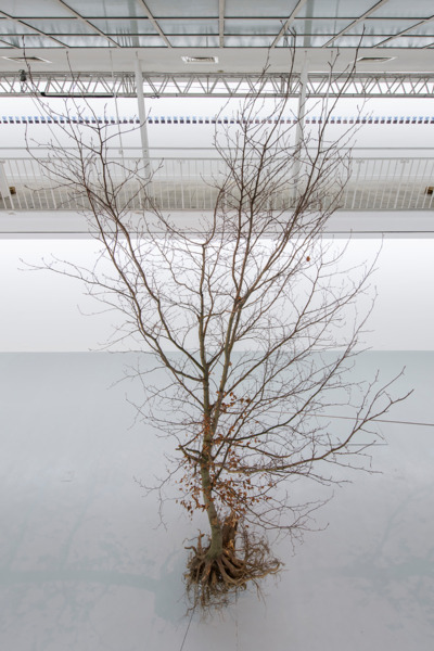 Installation view 'A Tree (Suspended)', Kunstverein Freiburg, Freiburg, 2016