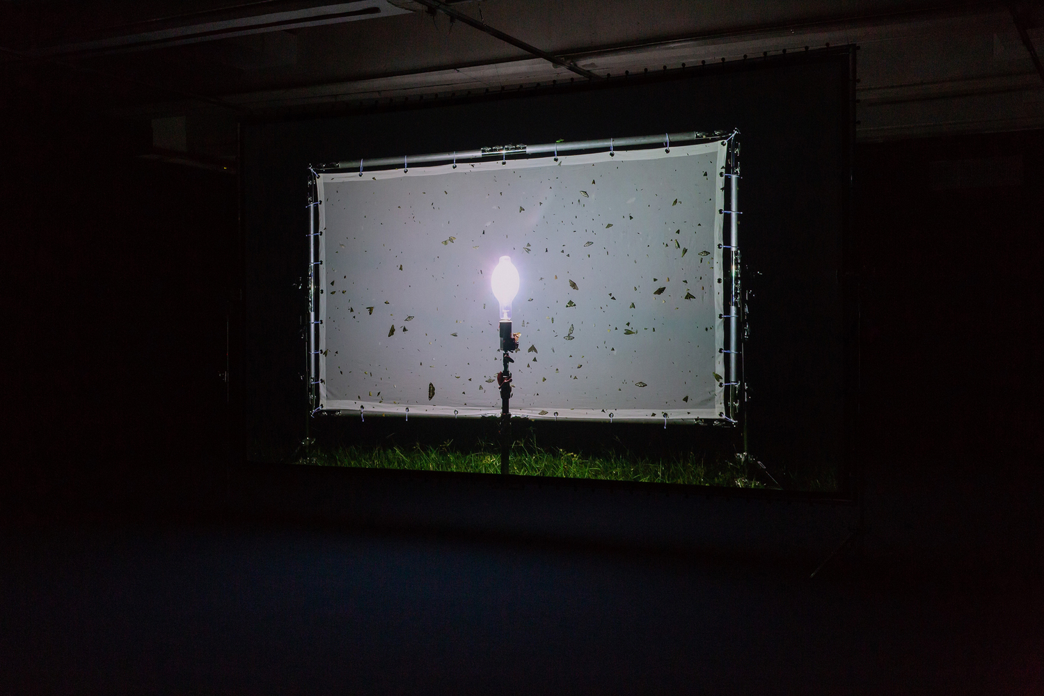 Blinded By The Light, 2018, Two-channel video, color, sound, butterfly frame, Installation view 'Taipei Biennial 2018 Post-Nature A Museum as an Ecosystem', Taipei Fine Arts Museum, Taipei, 2018