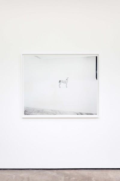 Pedigree English Greyhounds, Valldemossa dell'Attimo Fuggente (Vera) and Kollaps Livets Dans (Victor) photographed at Four Studios, Mirafiori Car Plant, Turin, 2019, Silver gelatin type LE/Selenium toned print, 107 x 132 x 4.5 cm